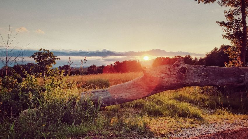 Sun Setting by the Big Old Log of Wood & Farmers Field Plant Sky Tree Nature Water Sunlight Land Beauty In Nature Sunset Field Environment Outdoors Scenics - Nature Landscape Day Sun Growth Lens Flare Sunbeam