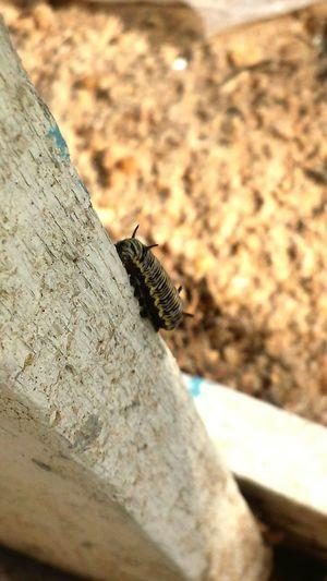 Close-up Outdoors Nature 10ramadan Focus Taking Photos Galaxys4 Outside Snails🐌 Snail Nature