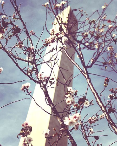 Low angle view of magnolia blossoms against sky