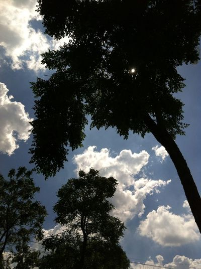 Beautifully Organized Tree Silhouette Sun, Clouds And Sky Collection Clouds And Sky Beautiful Nature Low Angle View At Noon Under The Trees Suburban