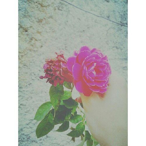 As flores são lindas e simples, até quando estão morrendo. - Pequeno Sonhador.