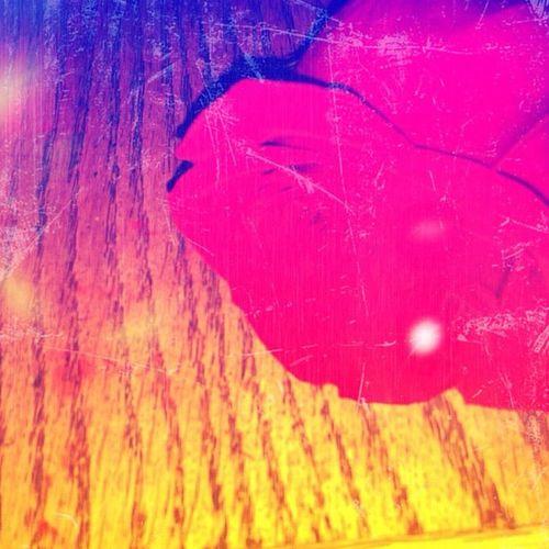 #gift #stranger #ny #nyc #newyork #city #newyorkcity #nightlife #out #eastvillage #rose #thorn #flower #beautiful Newyork Out Stranger Newyorkcity 10likes Eastvillage Thorn NYC City Flower Beautiful Rosé Nightlife Gift NY