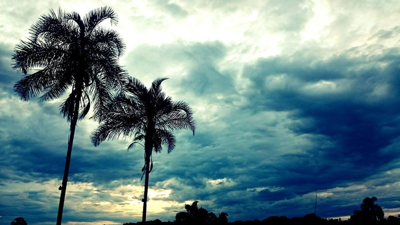 Trees Coconut Trees Sky Clouds Cloudy Wind Blue