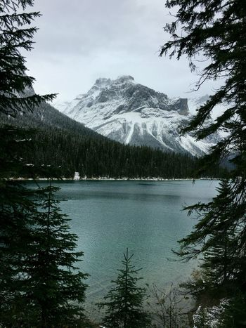 Canada Canadian Rockies  IPhoneography Tree Water Mountain Sky Plant Nature Scenics - Nature Beauty In Nature Tranquility Day Reflection Snow Tranquil Scene Lake No People Winter Cold Temperature Cloud - Sky Snowcapped Mountain Mountain Peak