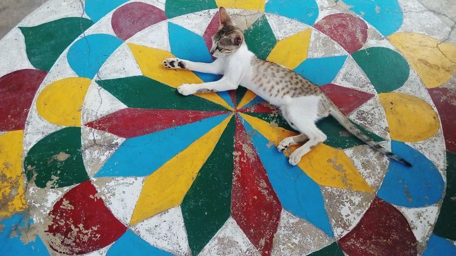 Close-up of cat on multi colored floor design