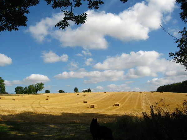 Blue Sky over Open Fields after Harvest After Harvest Agriculture Bale  Cloud - Sky Day Farm Land Field Hay Bale Idyllic Landscape Landscape_photography Landscapes Nature No People Outdoors Scenics Sky The Cotswolds Tree