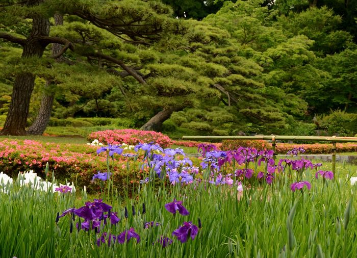 Imperial Palace Garden Imperial Palace Tokyo Flower Grass Green Color Growth Outdoors Purple Tree