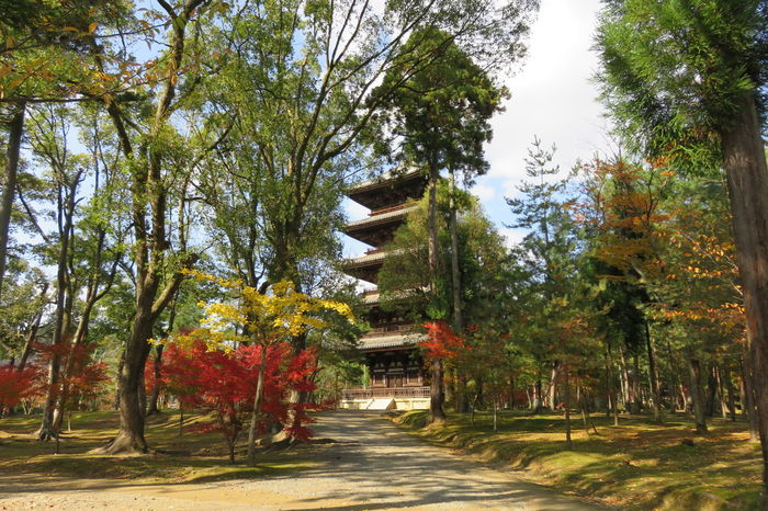 仁和寺 京都 日本 五重塔 Kyoto, Japan Autumn Beauty In Nature Branch Day Growth Leaf Nature No People Outdoors Scenics Tranquility Travel Destinations Tree