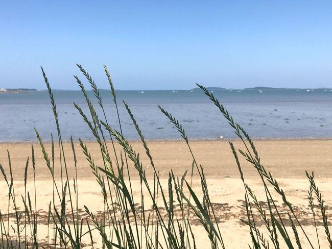 Sea Beach Nature Horizon Over Water Scenics Tranquility Near And Far
