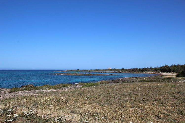 Beautiful view of the Marine Reserve of Torre Guaceto near Brindisi, Puglia, South Italy. Brindisi Puglia South Italy Torre Guaceto Wildlife & Nature Beach Beauty In Nature Blue Clear Sky Day Grass Horizon Over Water Landscape Marine Reserve Nature No People Outdoors Scenics Sea Sky Travel Destinations Vacations Water