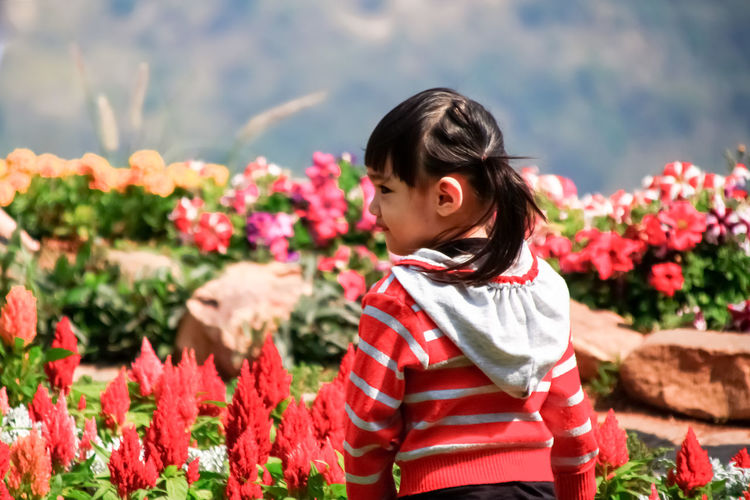 Portrait of cute Little asian girl in moment of happiness with flower garden wear sweaters in winter. Adorable Asian  Baby Background Beautiful Child Childhood Close Cute Daughter Expression Face Female Flower Garden Girl Happiness Happy Hat Healthy Joy Kid Little Lovely Nature Outdoor Overcoat People person Portrait Pretty Small Smile Summer Sweaters Sweet Thai Thailand Toddler  Travel Up White Winter Young