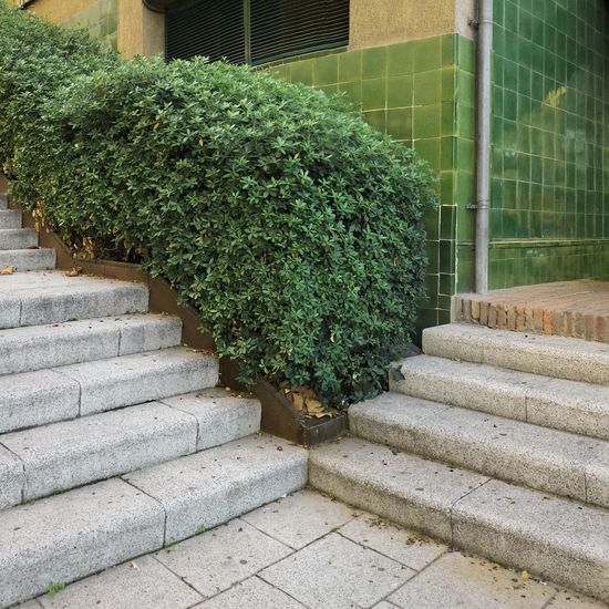 Plants growing on staircase by building