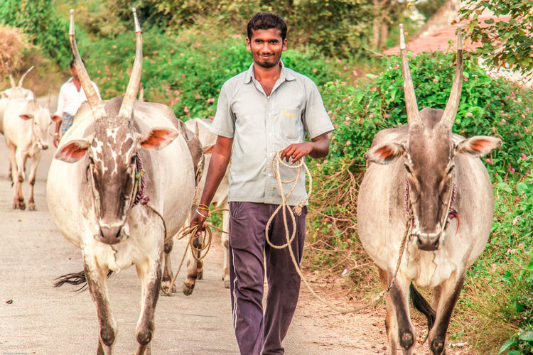 Two horny.. Traveling Agriculture Farmer Farm Livestock One Man Only Horse Rural Scene Cow Cattle Mammal Adult Outdoors Domestic Animals One Person Only Men Beard Looking At Camera Portrait Happiness An Eye For Travel