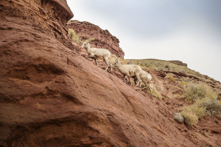 Low angle view of sheep on rock against sky