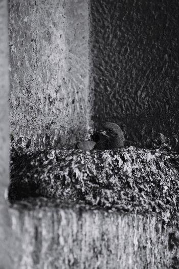 Waiting for the Sony70 400 SONY A7ii Church Of St Blackandwhite Frist Eyeem Photos Shot Scenics Barcelona Bird's Nest Chicks City Hungry