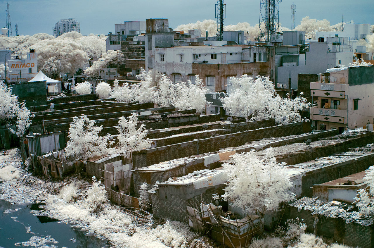 White Trees Growing By Slums