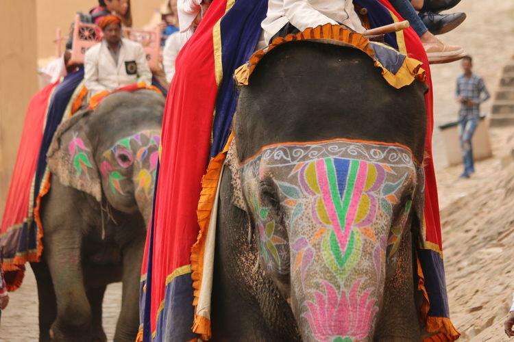 Elephant Parade Amber Fort Jaipur Animal Themes Day Domestic Animals Elephant Focus On Foreground Incredible India Indian Elephant Mammal Multi Colored No People One Animal Outdoors Painted Elephants The Street Photographer - 2018 EyeEm Awards The Traveler - 2018 EyeEm Awards The Traveler - 2018 EyeEm Awards