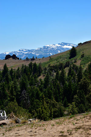 Warner Mountains, Modoc County, California Blue Evergreen Forest Green Mountains No People Pine Sky Trees