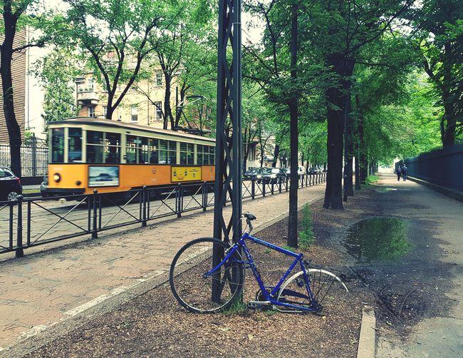 Tram Foreground Focus Tramway Tram Bike Broken Lone Leftbehind Robbed Stolen Sorrow Tree Bicycle Rack Bicycle EyeEmNewHere