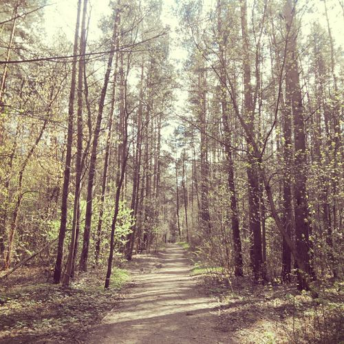 Nature In The City Belarus Nature Minsk Early Spring Nature Photography Forest Path Path To Spring