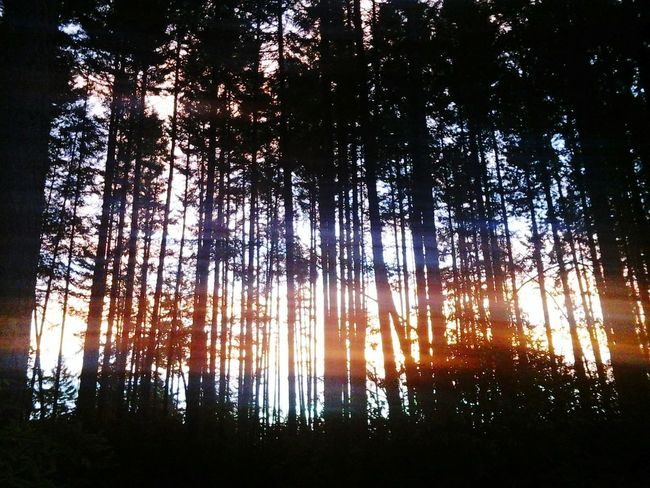 Landscape Outdoors Beauty In Nature Nature Essence Of Summer Tree Pacific Northwest  PNW Morning Light Forest