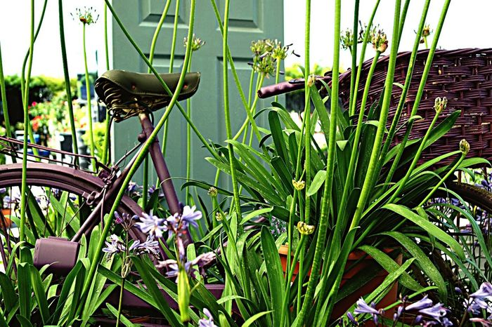 Photography Growth Plant Flower Outdoors Green Color Leaf Freshness No People Bicycle Basket Door Low Angle View Beauty In Nature Grass