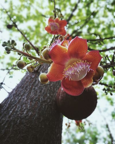 Growth Red Focus On Foreground Fruit Close-up Plant Tree Nature Day No People Outdoors Freshness Beauty In Nature flowers