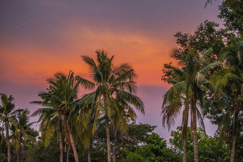 Samut Prakan Sunset Jungle Thailand Beautiful Nature ASIA Nationalpark 5dmk2 70-300L