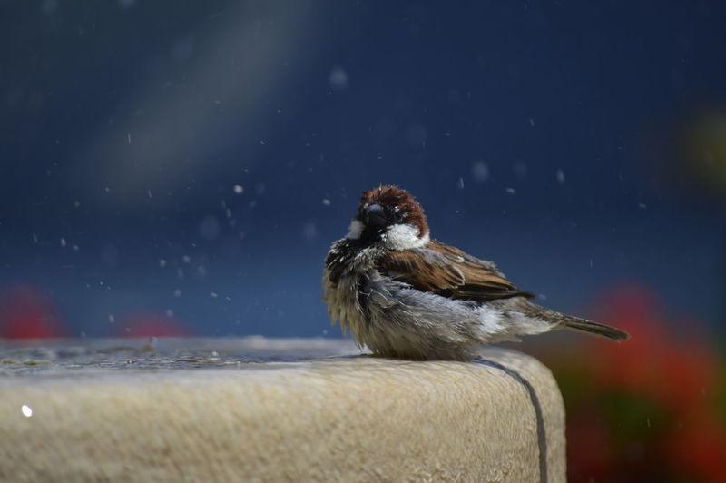 Bird perching on a fountain