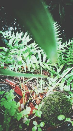 The Nature Growth Green Color Leaf Plant No People Outdoors Freshness Personal Perspective Huawei P8 Lite. Green Color My Smartphone Life Enjoy The New Normal Fresh On The EyeEm Fresh On The Market 2016 Fragility Huawei P8 Lite Close-up Autumn Leaves Autumn Autumn Collection Ground Floor