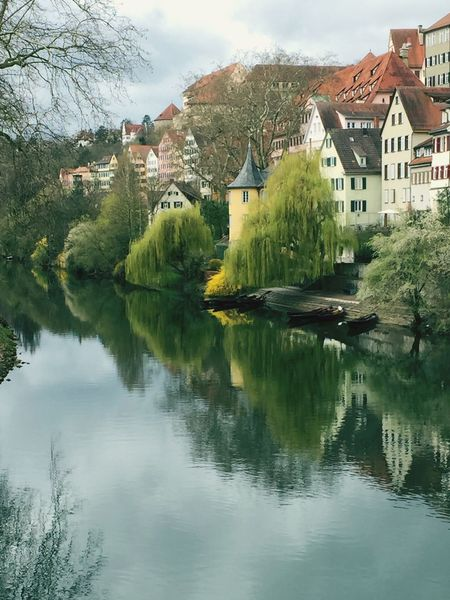 Beauty Bellezza Primavera Spring Lovemycity Tübingen Reflection Things I Like Neckar Here Belongs To Me Hoelderlin TreePorn