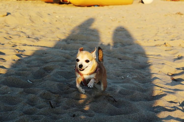EyeEm Selects Dog Pets Animal Sand One Animal Domestic Animals Beach Day Nature No People Animal Themes Summer Beauty In Nature Sand Dune Dog Days Pets And Animals Happiness Dogslife Dogs Sardinia Dogoftheday Dog Love Italy🇮🇹