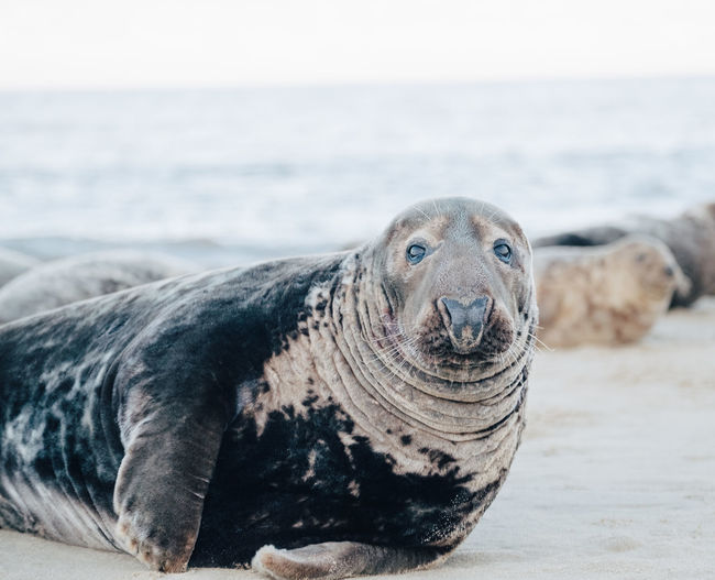 Close-up of a seal in the sea