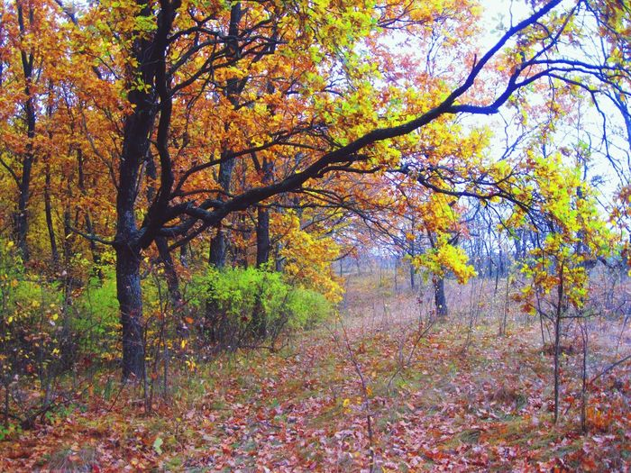 осень прекрасна 🌾🍂🍃 Лес🙈