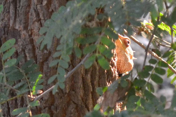 Backdoor Chameleon Chameleon Spirit Close-up Hiding Nature Outdoors