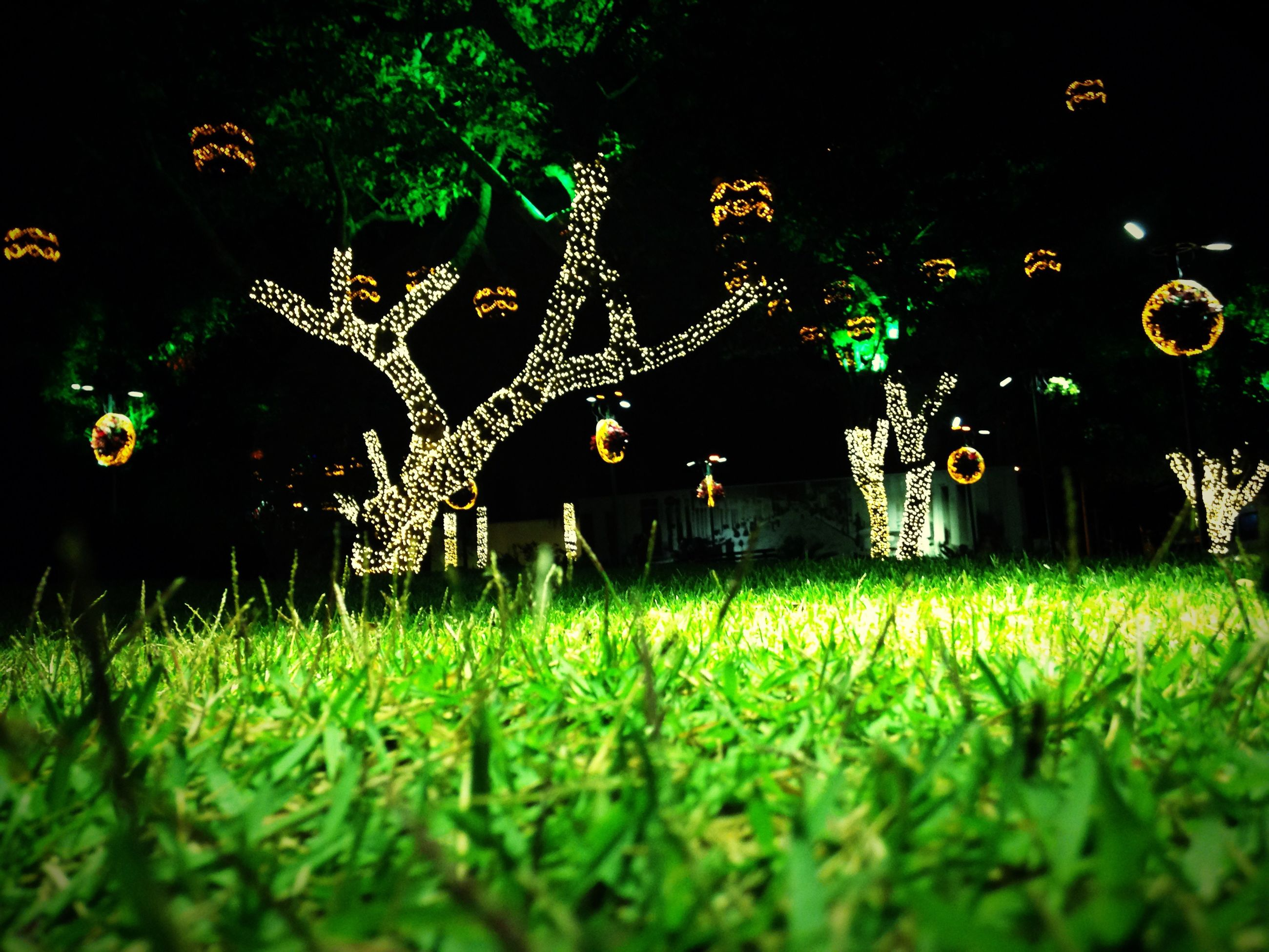 night, illuminated, surface level, grass, tree, green color, selective focus, growth, field, decoration, outdoors, tranquil scene, tranquility, scenics, no people
