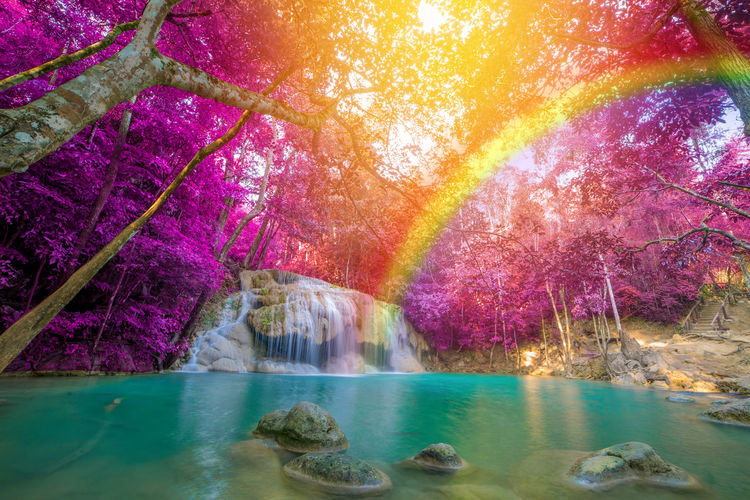 Scenic view of rainbow over river in forest