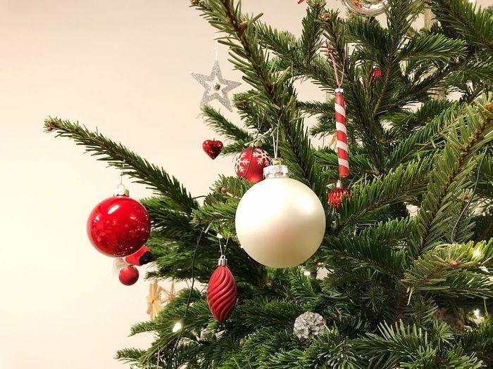 Tree Christmas Holiday Christmas Decoration Christmas Ornament Celebration christmas tree