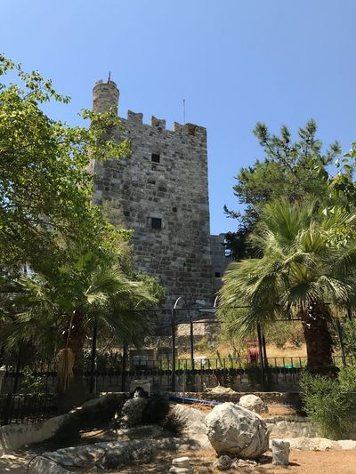 Architecture Tree History Built Structure Building Exterior Castle Day Clear Sky No People Low Angle View Outdoors Travel Destinations Nature Sky Bodrum, Turkey