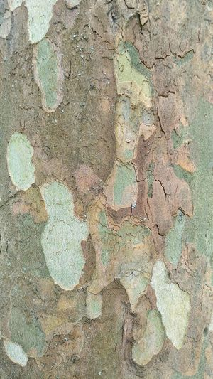Textured  Backgrounds Full Frame Abstract Rough Pattern Close-up Day No People Outdoors Nature Bark Texture Background Bark Bark Of A Tree Haki Green