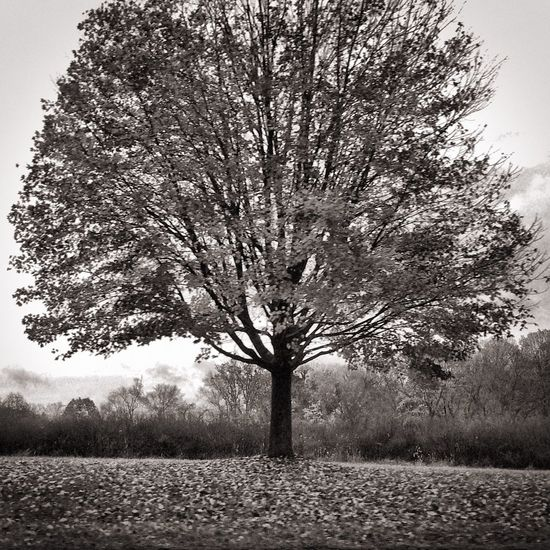 Showcase: November Black And White Nature