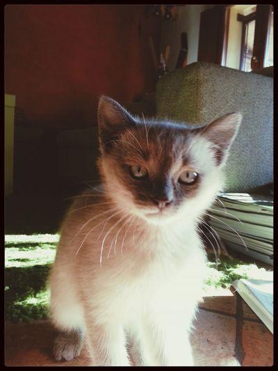 uno sguardo intenso di Tao Cat