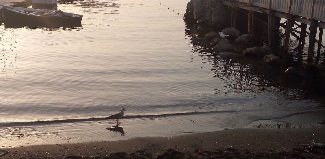A gull on the side Water Bird Nature Outdoors Swimming Day Gull Side Seaside Sun Sunset