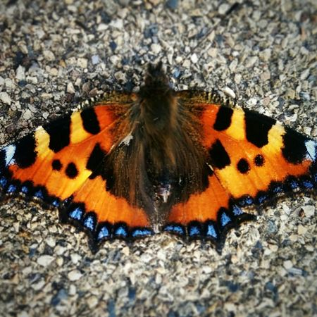 Beautiful Butterfly. Hanging Out Taking Photos Nature Phoneography Check This Out Colorful Butterfly
