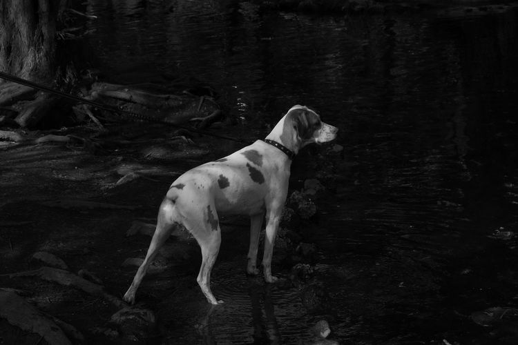 Atmosphere Black & White Film Noir In The Dark Pond Suspense Waiting Alert Dog Animal Themes Black And White Friday Bookcover Curiosity Darkness And Light Dog Film Noir Style Looking For Monochrome Mysterious Mystery One Animal Outdoors Park Sentinel Thriller