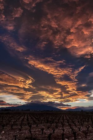 Sky Wind Firesky Sky Fire Outdoor Photography Vineyard Southoffrance Canon Sunset_collection Pyrénéesorientales Canigou Mountain Canigou France Lenticulaire Lenticularis Sunset Day Outdoors