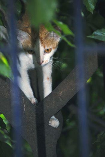 Cat Cat On Tree Lowlightphotography Portrait Looking At Camera Tree Close-up