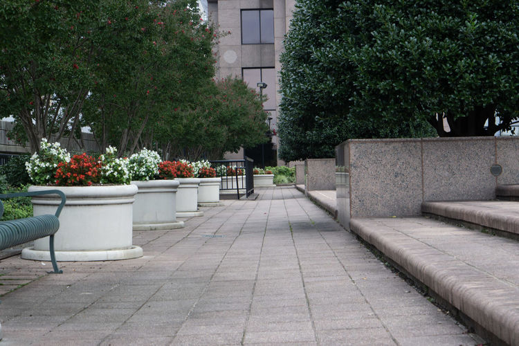 Potted plants on footpath by building in city