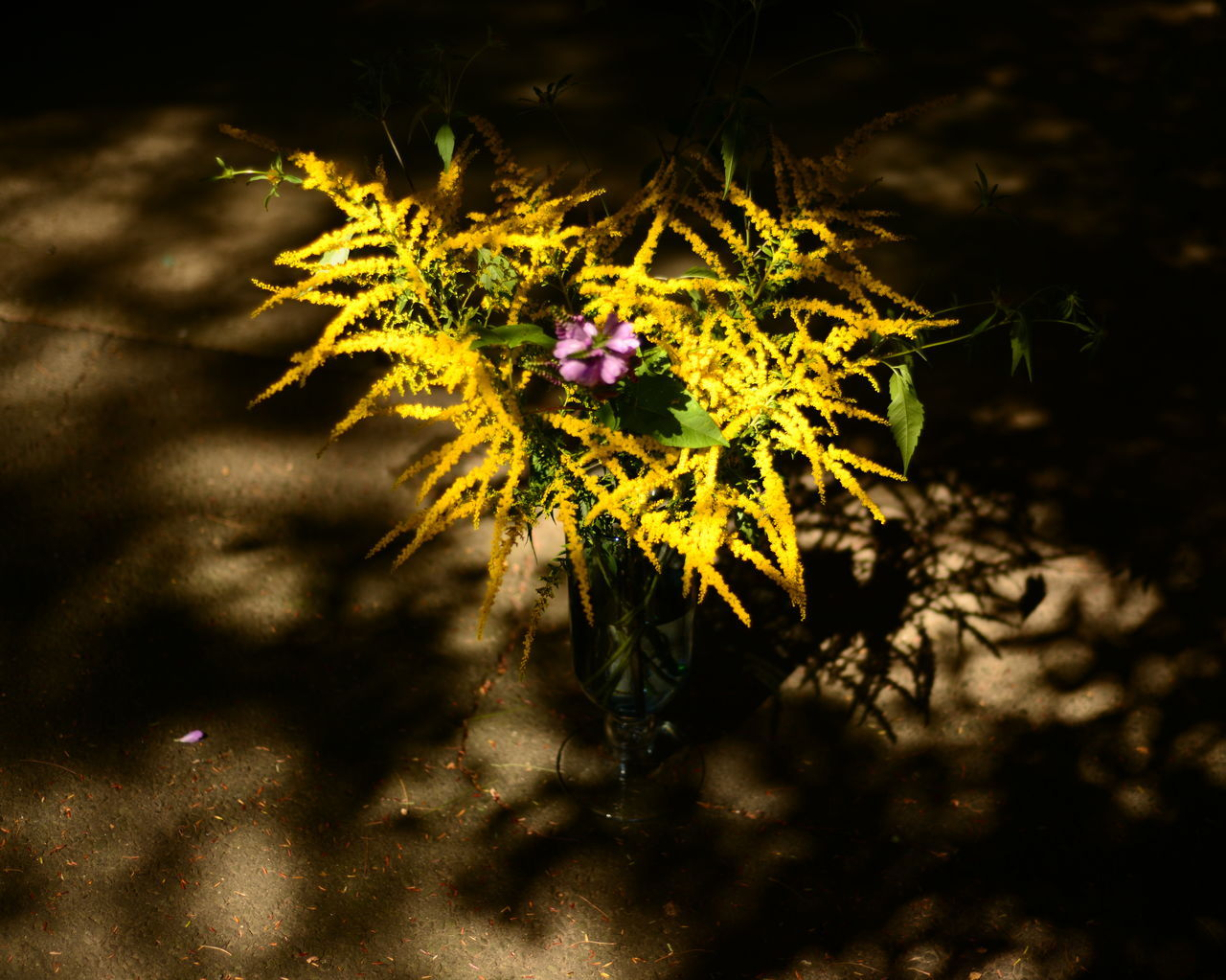 flower, growth, fragility, nature, petal, plant, beauty in nature, flower head, freshness, no people, yellow, outdoors, day, close-up, blooming