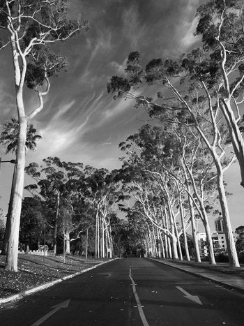 Road Tree The Way Forward Outdoors Transportation Cloud - Sky No People Sky Day City Kingspark Perth Australia EyeEmNewHere Summer Exploratorium